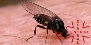 mosca-ngra-imagen