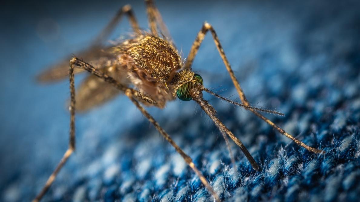 El Mosquito Tigre: todo lo que debes saber